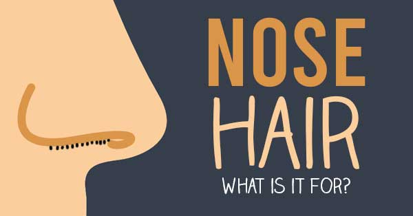 nose hair why it is important