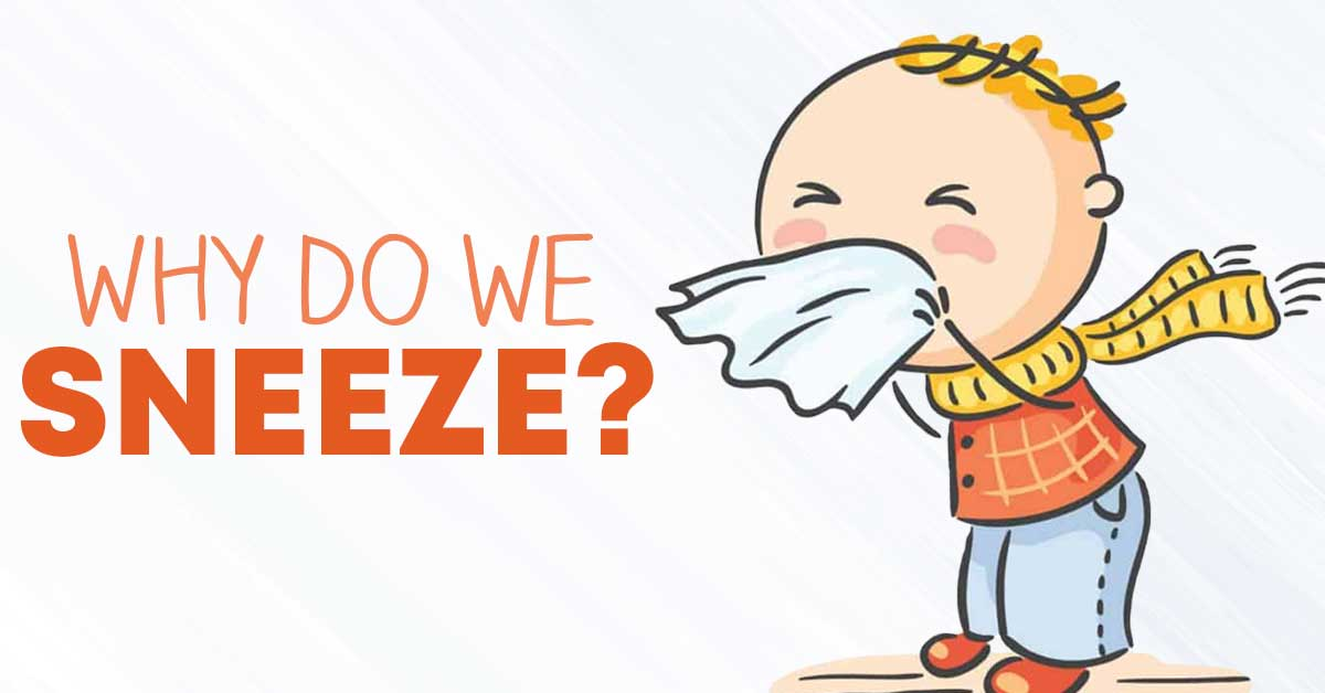 why do you sneeze