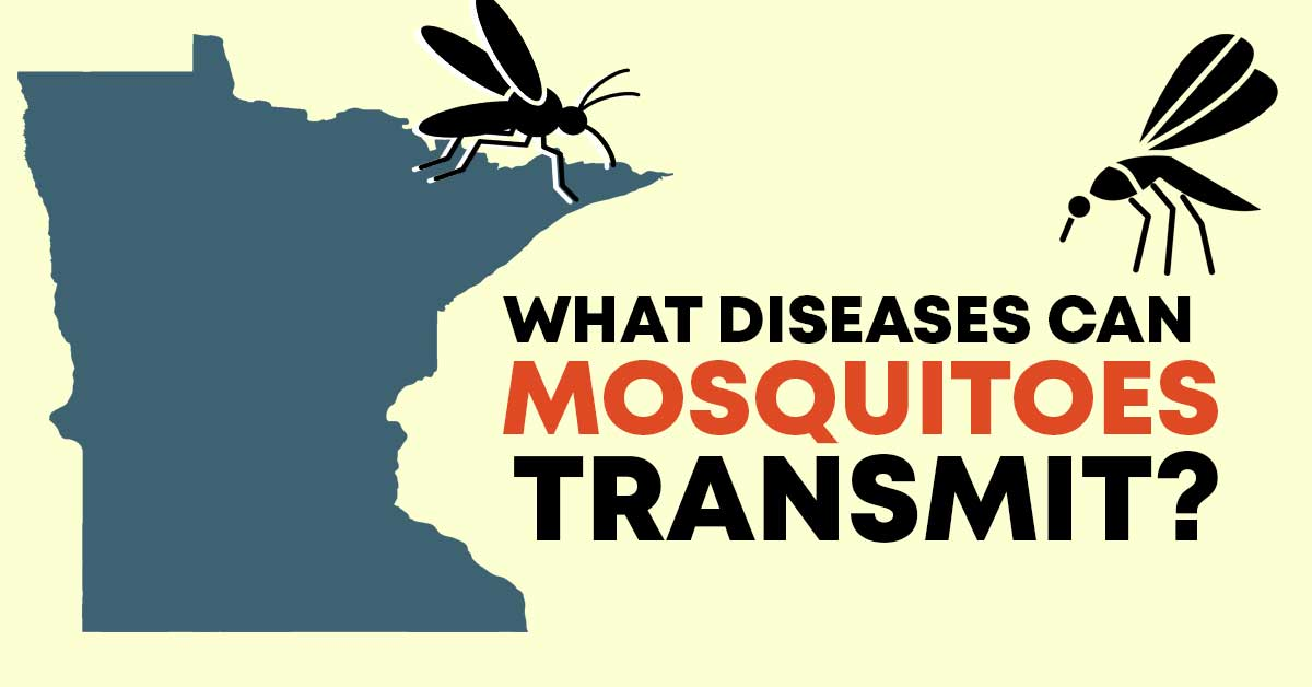 what diseases can mosquitos transmit