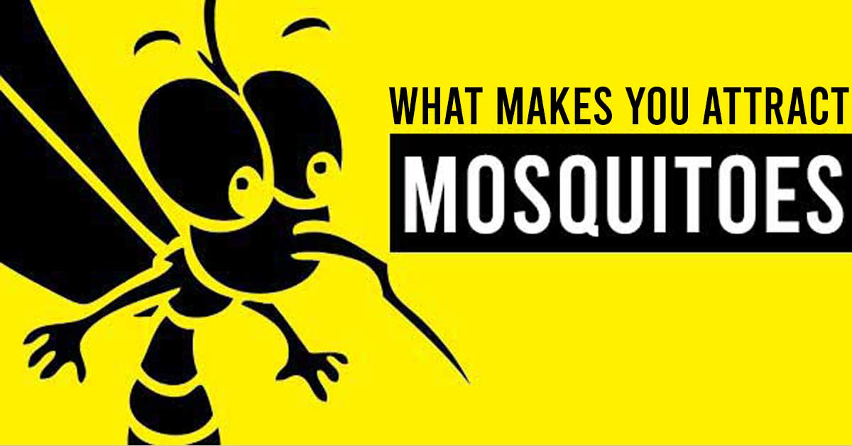 what makes you attract mosquitoes