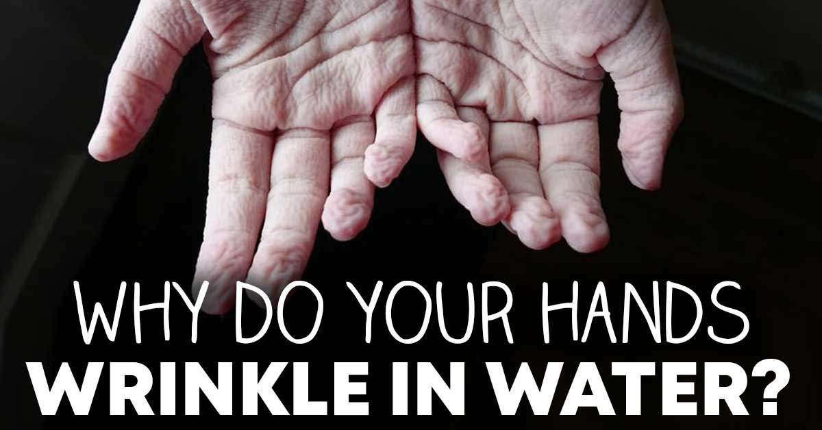 why do you hands wrinkle in the water